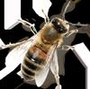 Bee_003