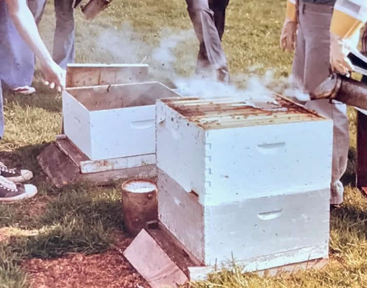 Hive inspectionsat a beekeeping field day