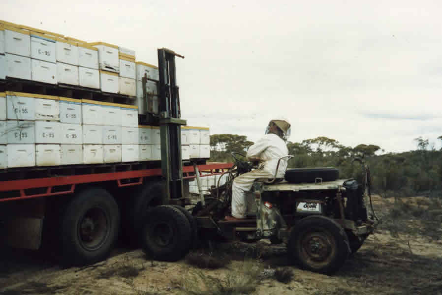 Placing hives in the bush